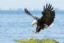 Load image into Gallery viewer, 🔥 HOT SALE & Limited to 100 🔥Realistic eagle