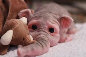 Silicone BABY Elephant Doll